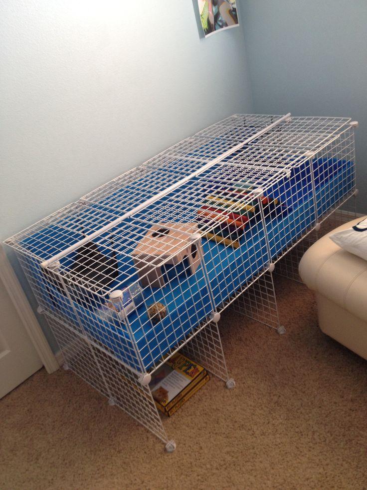 Guinea pig c c cage guinea piggies pinterest for Where to get c c cages
