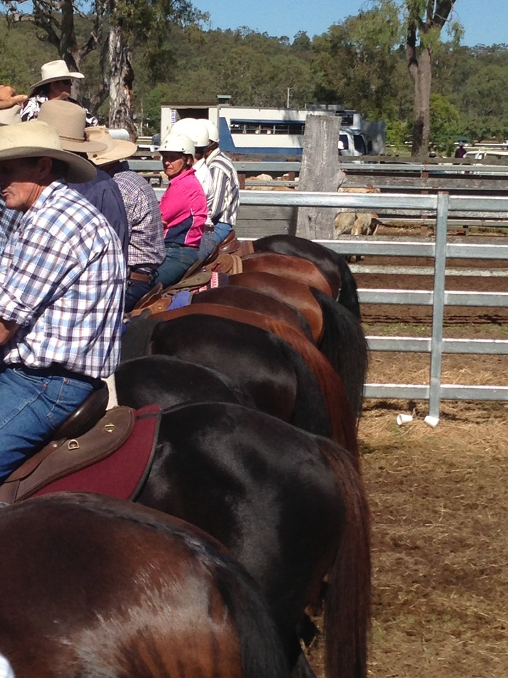 Esk campdraft - love a row of bums :)