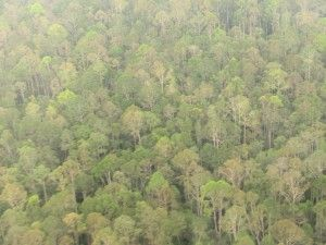 """""""Asia Pulp and Paper's Forest Clearing Moratorium in Indonesia is Holding"""" by PGS Alumnus Phil Covington #deforestation #mba #environment"""