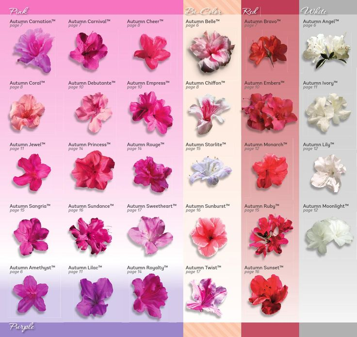 ISSUU - Encore Azalea Brochure 2014 by OpteraCreative