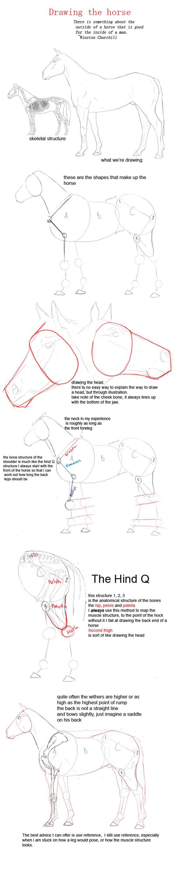 Drawing A Horse By Yobiantart On @deviantart: