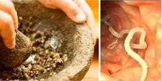 Elimine vermes e ameba com estes simples remédios caseiros   Cura pela Natureza
