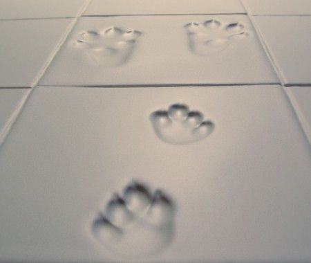 paw print tiles