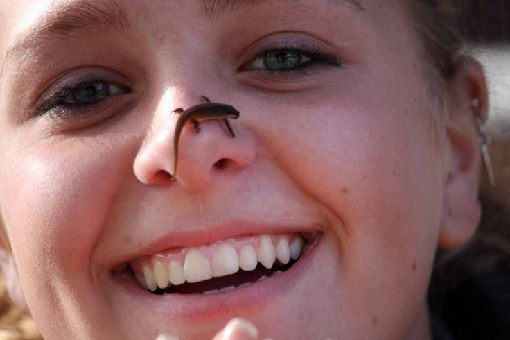 Salamander - Little amphibians on the loose.