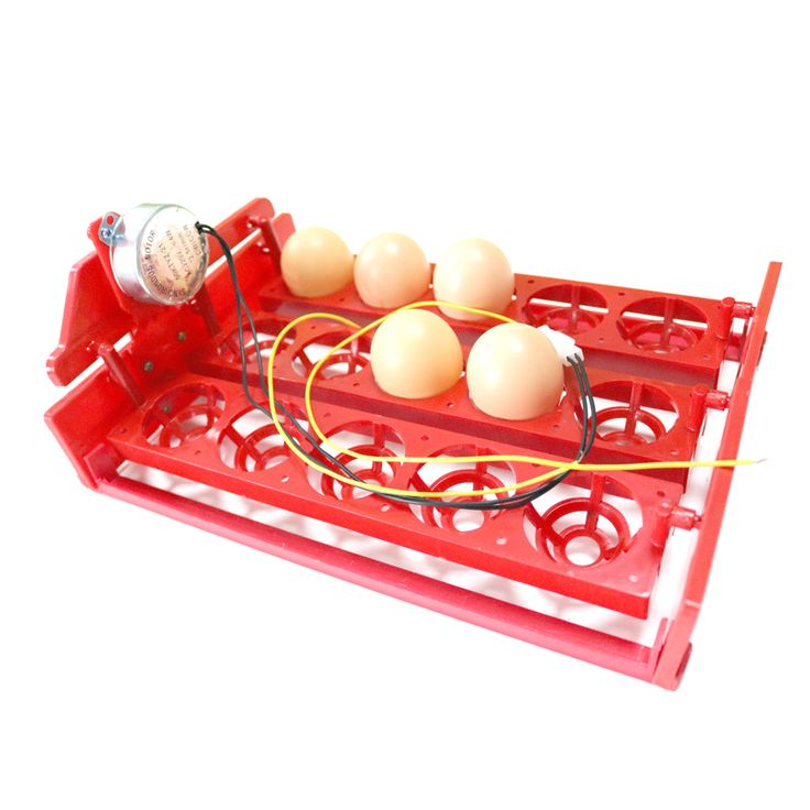 best price 15 eggs incubator egg tray 3 5 holes automatic incubator egg tray automatically turn the #poultry #farming