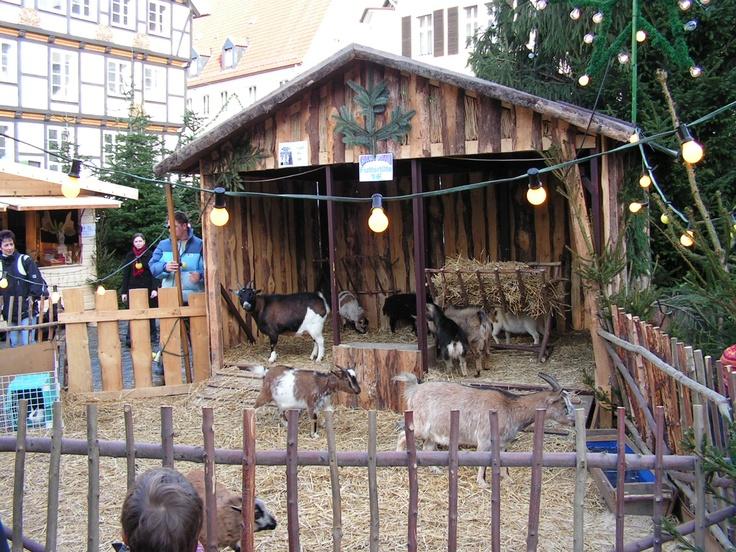 Tiere auf dem Weihnachtsmarkt in Soest