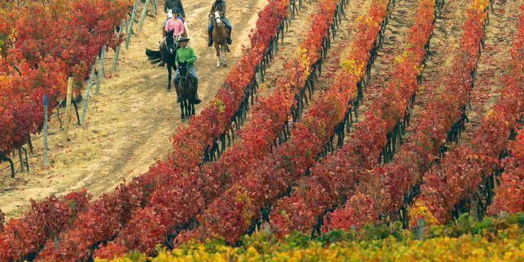 Vineyard at the Lapostolle Residence, Santa Cruz, Chile.