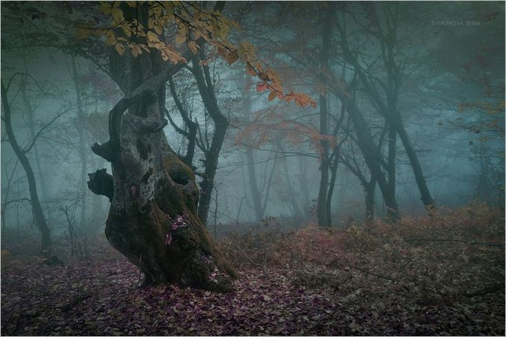 Фотография фотографа Шипунова Ирина - Мистический лес 8