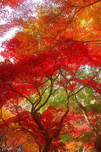 ~ Autumn Color Concerto ~ by Yumi