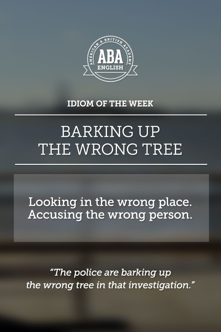 """English #idiom """"Barking up the wrong tree"""" means to look in the wrong place, to accuse the wrong person."""