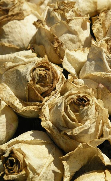 rozen drogen - Google zoeken
