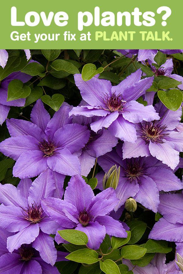 Best Garden Design And Inspiration Images On Pinterest Garden