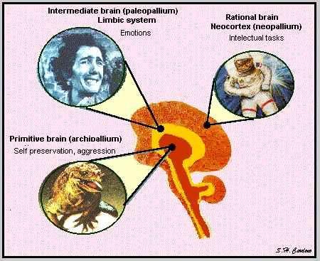 Paul MacLean's triune brain hypothesis