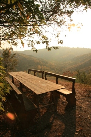 Great idea, great view! Pews as garden benches