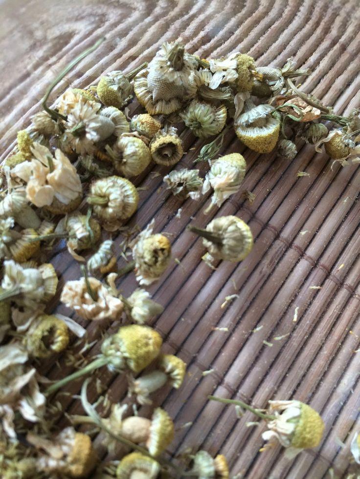 Chamomile flowers for my chamomile soap / Kamomillan kukkia kamomilla-hunajasaippuaan