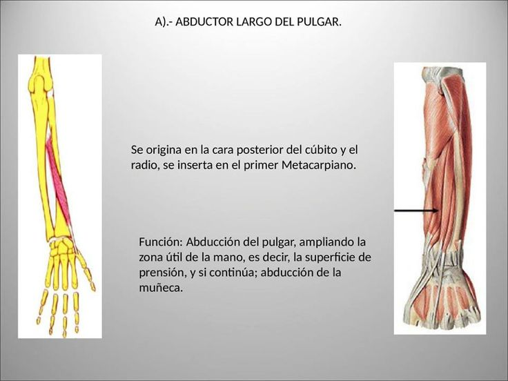 13 mejores imágenes de Maria Belen Sanchez Mansur en Anatomía 2 ...
