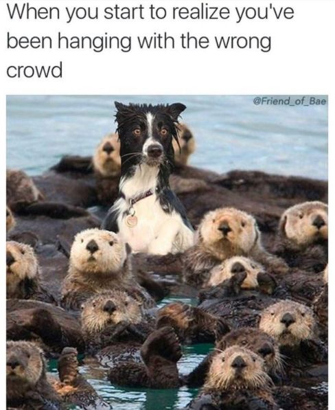 35 Pics Prove There's a Little Animal in Each of Us -