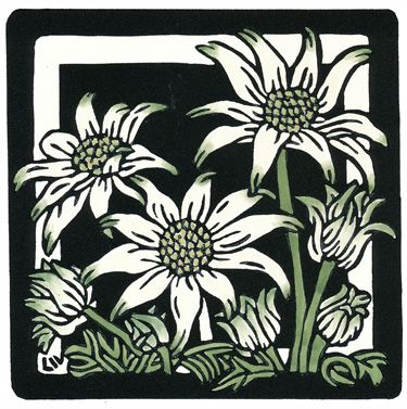 Flannel Flower Square - Limited Edition Handpainted Linocuts by Lynette Weir