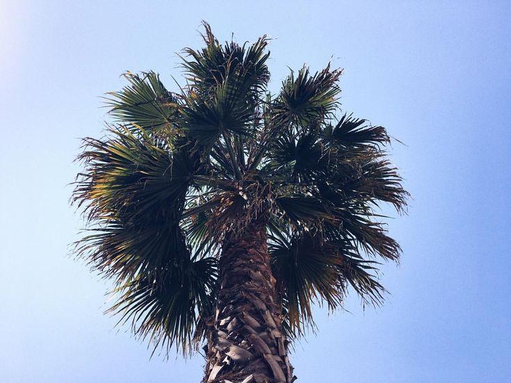 "88 Gostos, 3 Comentários - Maria Cardoso (@xmariacardosox) no Instagram: ""🌴🤙🏽#Feed #PalmTrees #Photography #InstaGirl #Trendy"