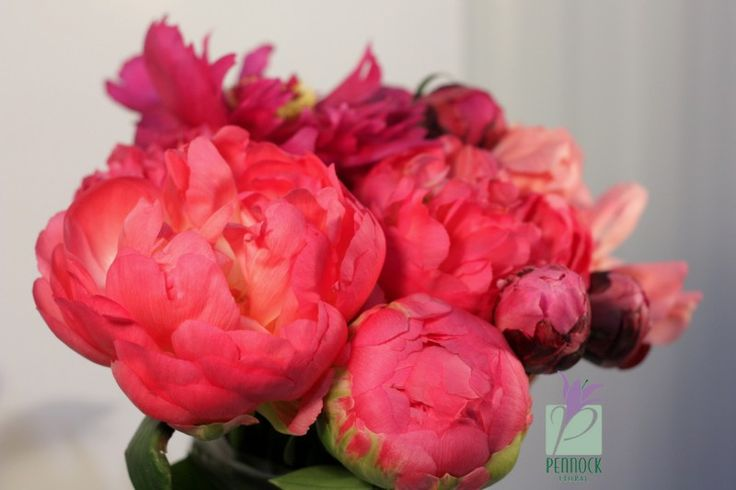 White Peony Flower Delivery 22538 peony flowers delivery