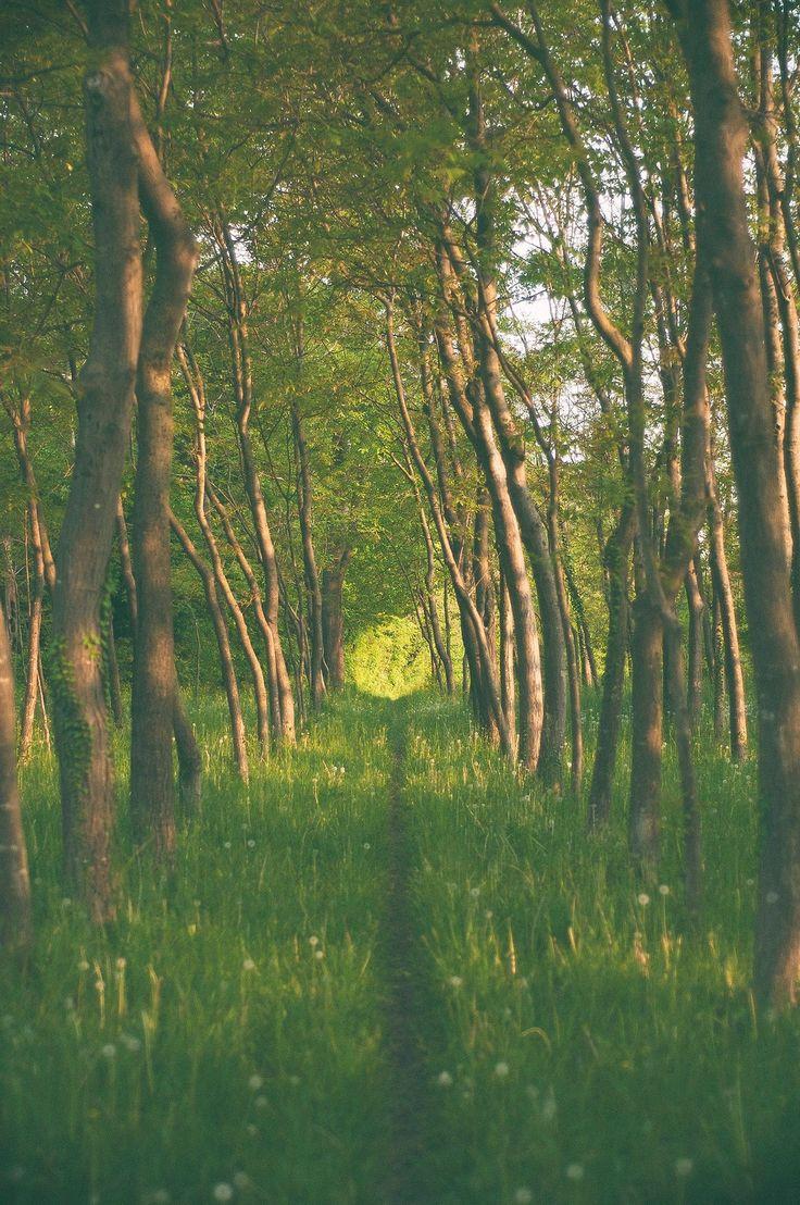 A grassy trail through a grove on a sunny day
