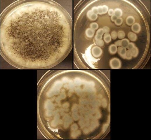 Battery Disposal Problems Solved By Fungi