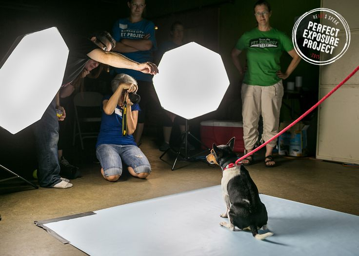 Our 2015 round of Perfect Exposure Projects started at KC Pet Project in MO. Here's how it went down!  Thanks to our generous donors, Petco Foundation, Petfinder.com, and Animal Farm Foundation, for helping to make this series of lifesaving workshops a reality.