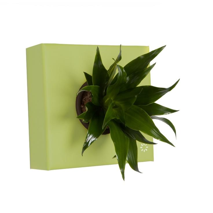 K-Pot Tek - Yeşil