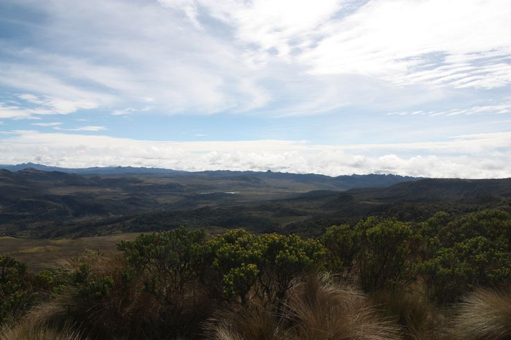 View of the Paramo area when ascending to Purace Volcano.