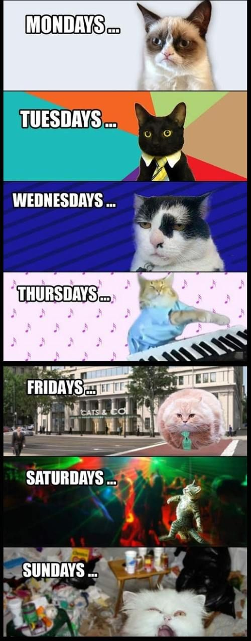 I look like the wednesday cat, right now...I can sleep until Friday, I am so exhausted :/