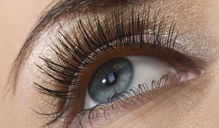 Some interesting facts: The entire length of all the eyelashes shed by a human in their life is over 98 feet.    Your eyelashes act like windshields to catch dust and debris before they reach your eyeball.    We all have microscopic creatures lurking in our eyelashes.