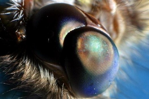 Biomimicry Example: Full-Color Night Vision for Toyota Drivers Based on Insect Eyes | Popular Science