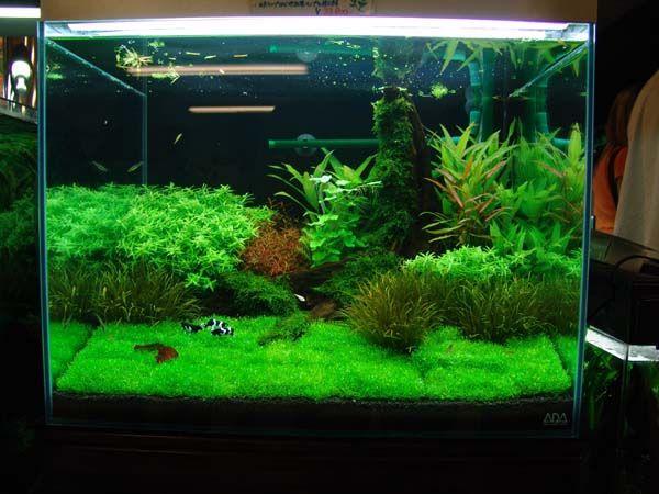 200 Best Indoor Aquariums Images On Pinterest Aquarium