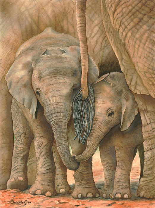 Watercolor of two baby elephants standing among the forest of legs of their elders - so sweet!