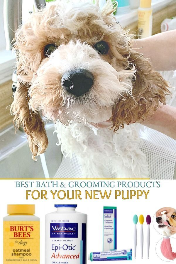 New Puppy Shopping Guide With Images New Puppy Puppy Safe Puppies