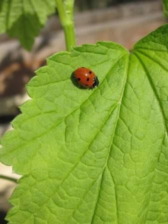 nuttige-insecten-lokken-natuurlijke-moestuin-Frankrijk