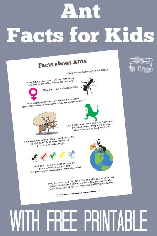 Fun Ant Facts for Kids With Free Printables