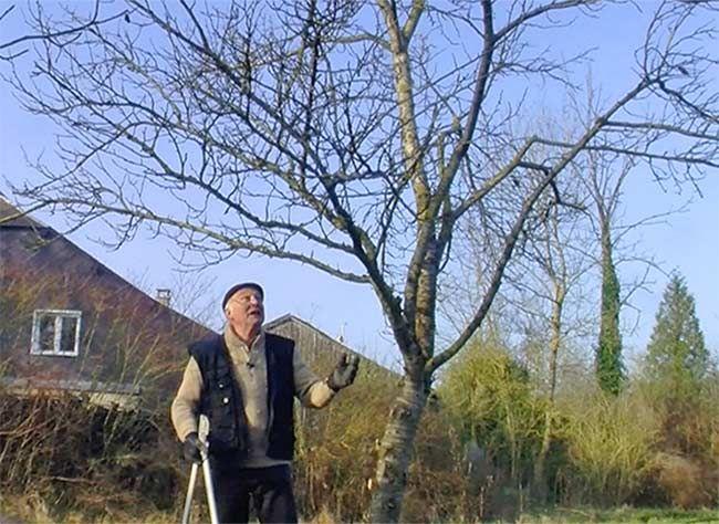 Comment bien tailler un prunier qui ne l'a pas été depuis quelques années. Une cure de jouvence avec les conseils d'Hubert le jardinier