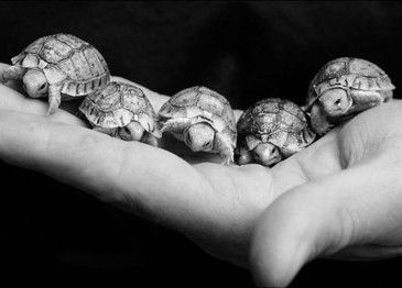 Baby turtles... too cute!  from bluemoonwinter