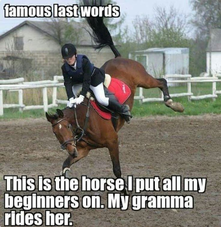 Ahahaha The infamous cranky mare that we all have owned one time or another.  LOL!  LLK