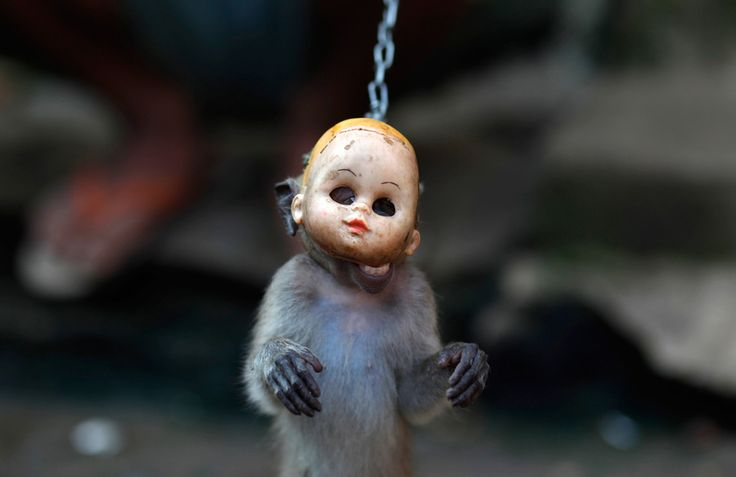 A trained monkey wears a mask during a Topeng Monyet (Monkey Mask) show, a traditional Indonesian street performance, in east Jakarta on April 25, 2011. (Reuters/Beawiharta)