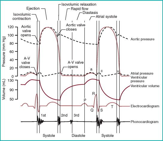 membrane potential ECG and mechanical change - Google