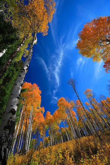 Clear fall skies