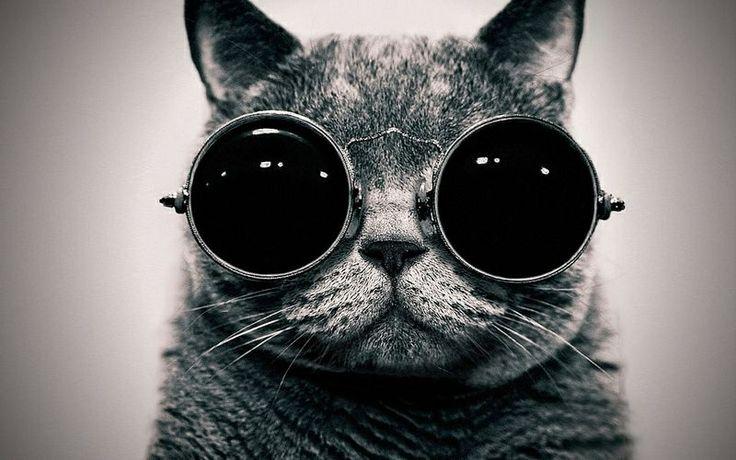 #kaenon sunglasses #41347 #dior sunglasses #discount sunglasses #hotsunglasses #Explore luiofer's photos on Flickr. luiofer has uploaded 2036 photos to Flickr. Visit - FUNMEMO.COM to see More