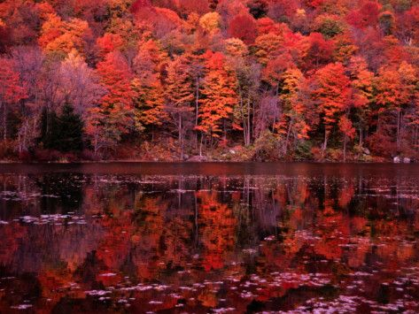 i love the fall. best season.
