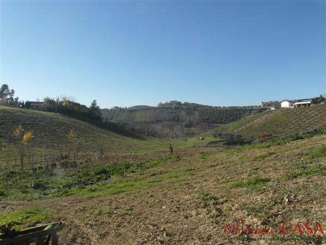 08-30 € 88.000,00 #terreno #uliveto in #vendita mq 25.000 circa a #Moscufo Villa Sibi #soluzionecasape #annunciimmobiliari
