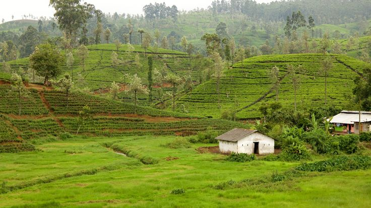 Why visit Sri Lanka