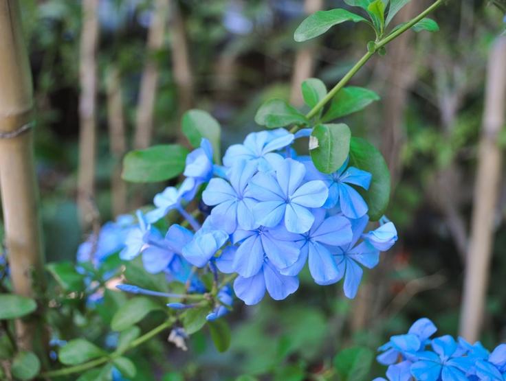 Amo los Colores! Azul