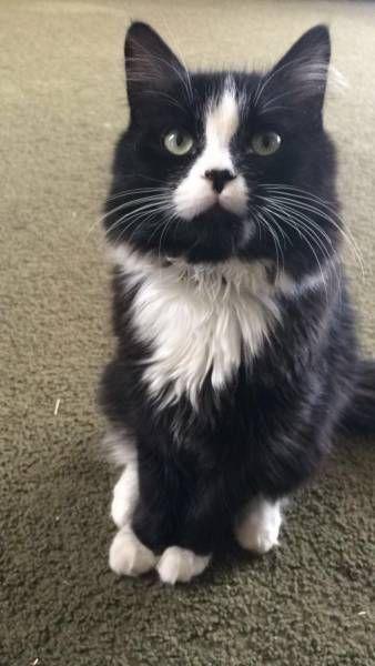 LOST CAT: 07/09/2017 - Brookfield, New Hampshire, NH, United States. Ref#: L33441 - #CritterAlert #LostPet #LostCat #MissingCat
