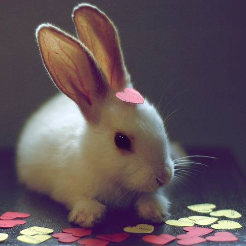 bunny bunny bunny bunny - Click image to find more Animals Pinterest pins